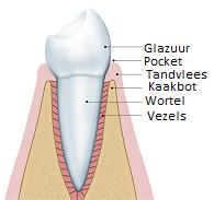 gezond tandvlees